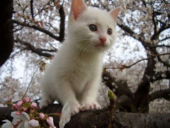 cherry_blossom_tree_cats_06