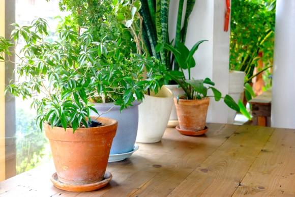 観葉植物に空気清浄効果は期待できない、ジャングルなみに大量に置かないと効果は得られない(米研究)