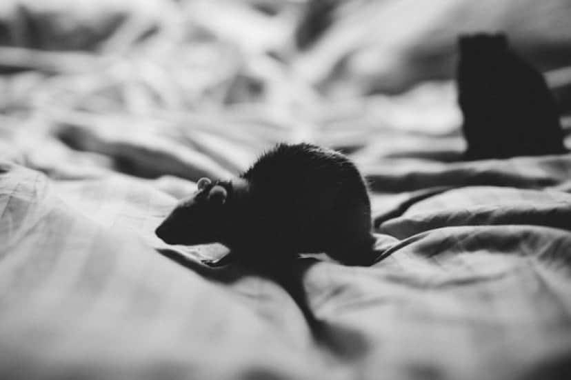 animals-2939604_640_e