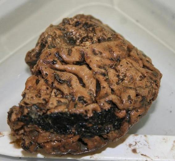 heslington-brain-sized