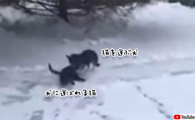 雪積る日、猫をくわえ自分の犬小屋に運び寒さから守ろうとした犬