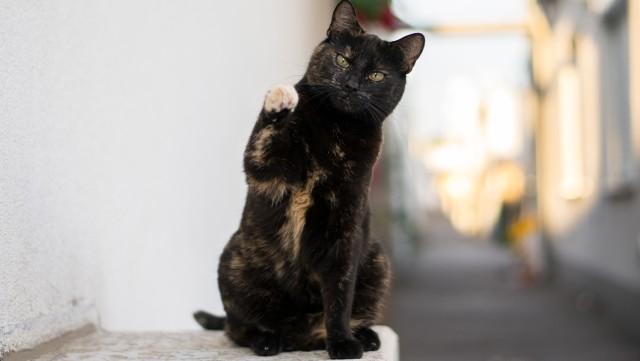 芸達者な猫、1分間に26のトリックでギネス記録に認定