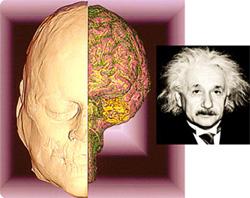 アインシュタイン博士の脳が、米...