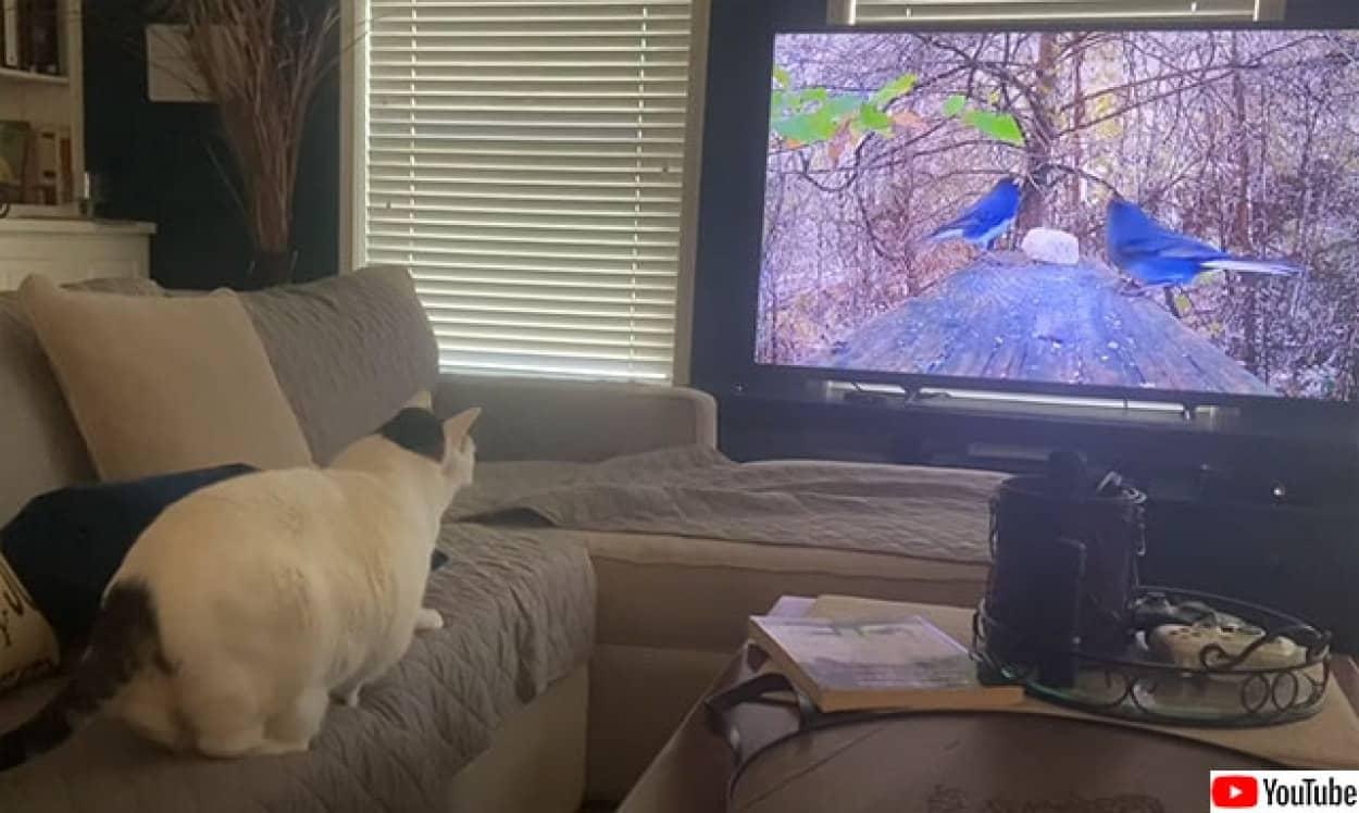 高画質のテレビと猫の相性問題