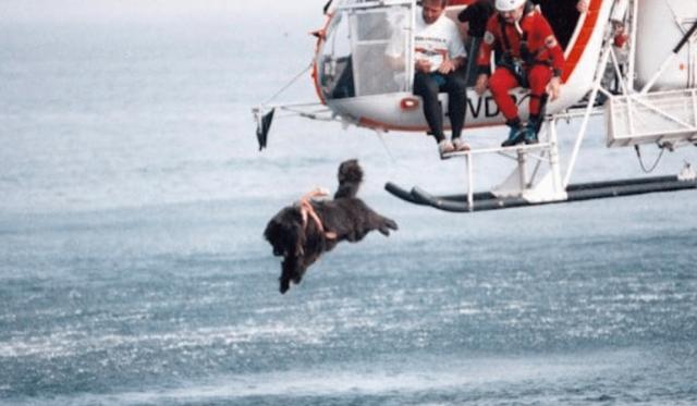 イタリアの海の安全を守るライフセーバー犬、ヘリから勇敢に水に飛び込み人命救助
