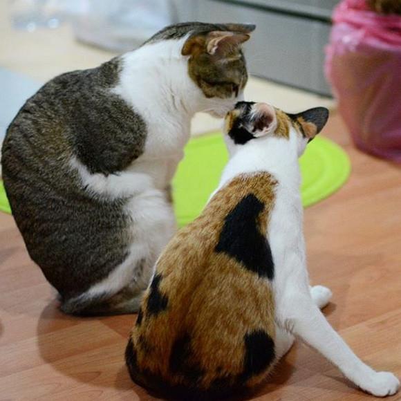 前脚のない猫と下半身不随の猫のきょうだいが、毎日を楽しく生きている光景の画像