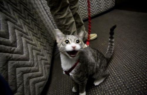 cats_41