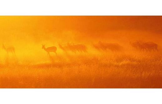 Springbok-in-Kgala_1402347i
