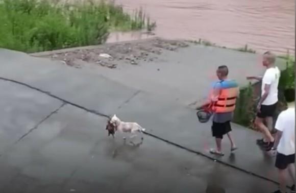 母犬が命がけで溺れている我が子を救出