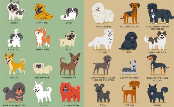 あの犬の意外な原産地がわかる!原産地別世界の犬種イラストポスター ...