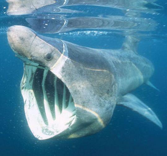 sharks_10