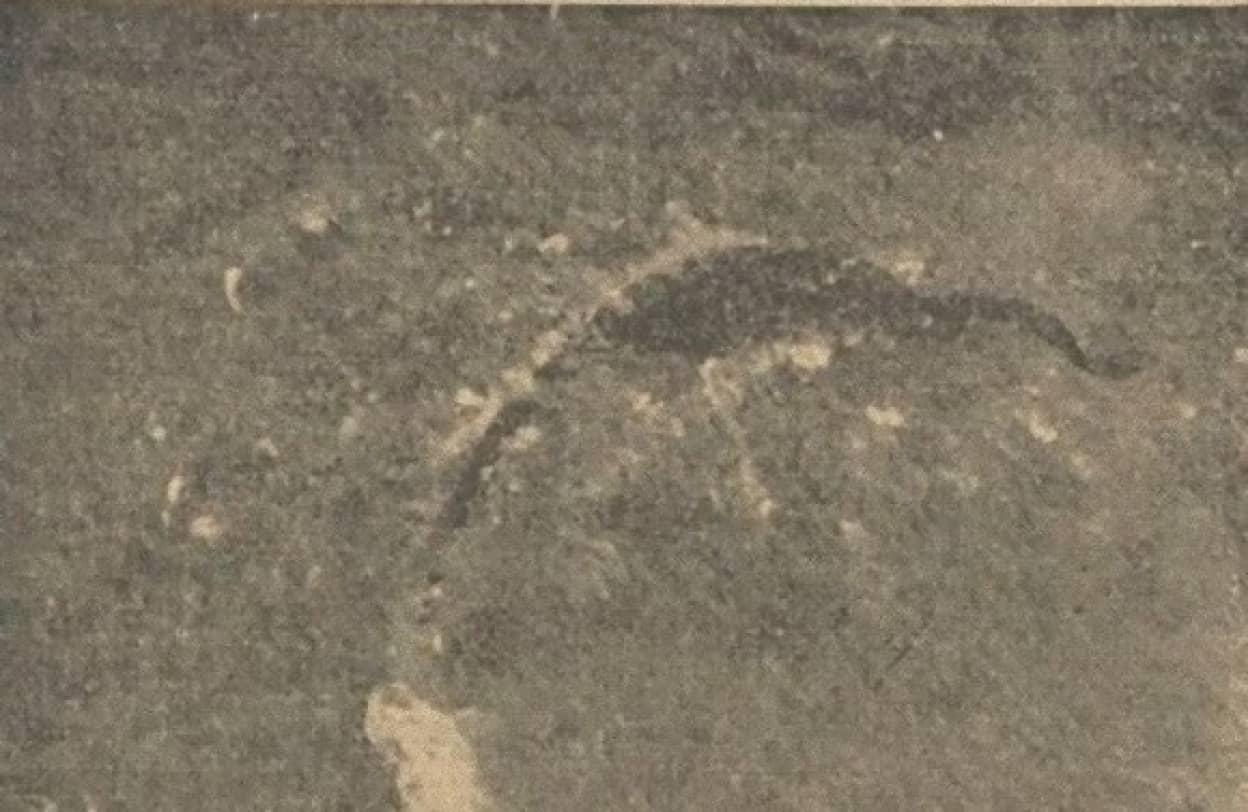 84年前に上空から撮影された海の怪獣
