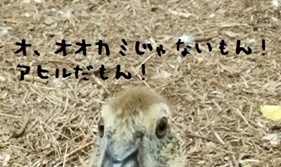 ookami1_e