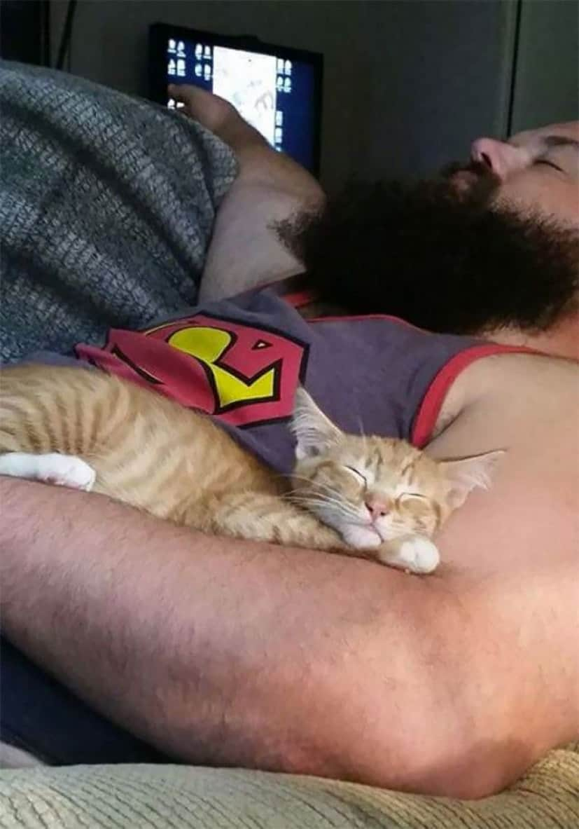 people-who-didnt-want-cats-23_e