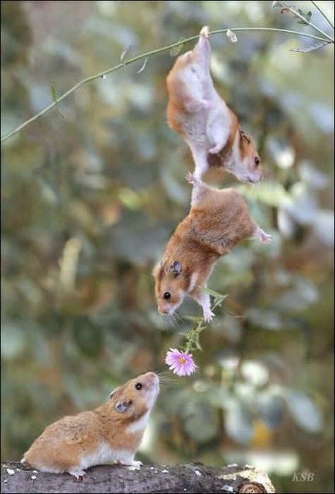 hamsters_12