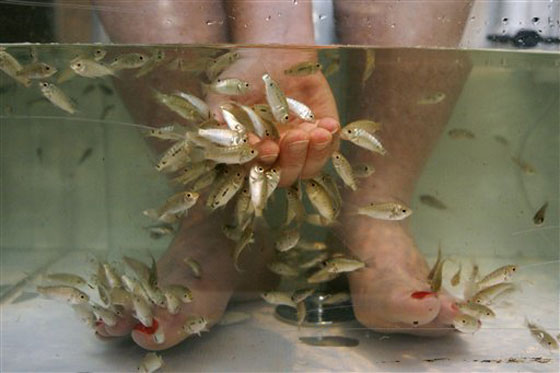 for Fish foot spa