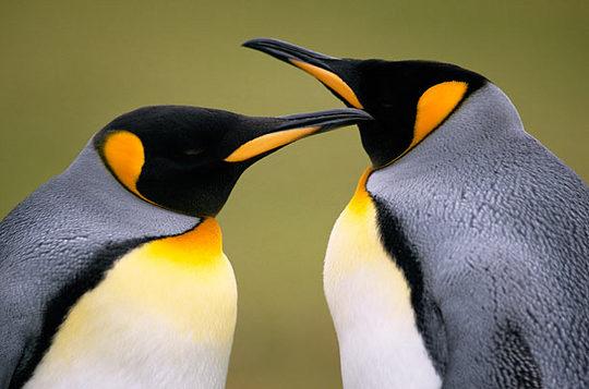 penguins_07