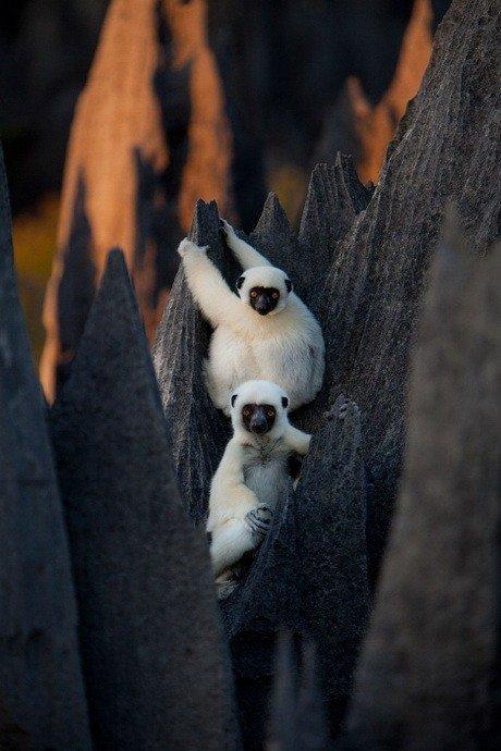 Madagascar_02