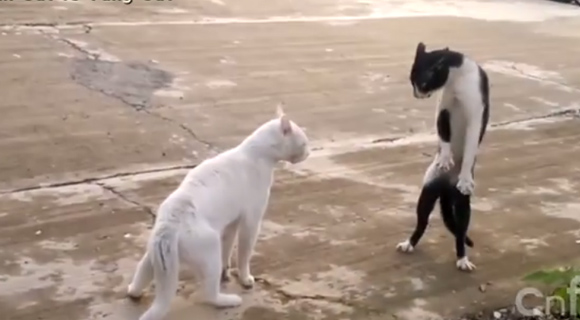やっぱり猫には魔力がある。猫だから憎めない、猫が世界を支配する映像を集めた総集編