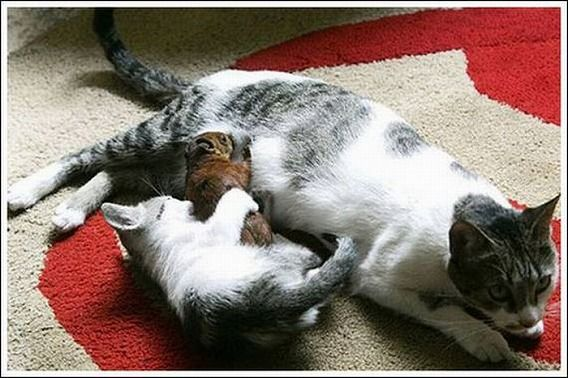 cats_and_squirell_02
