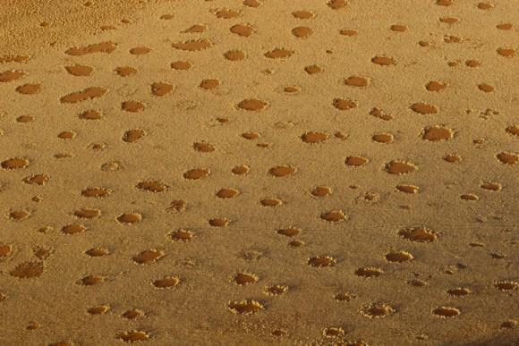 シロアリなの?気候なの?ナミブ砂漠に点在する謎の円形地帯「妖精の輪」の形成メカニズムの最新研究