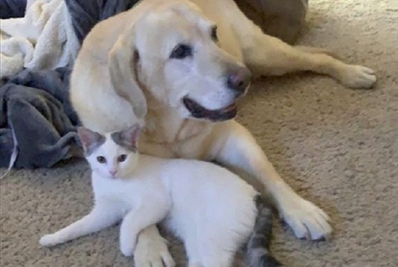 老犬が生まれたばかりの子猫の親代わりに。種と年齢を超えた強い絆が結ばれる(アメリカ)