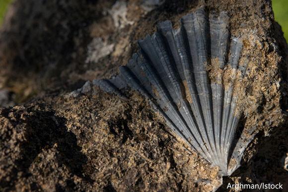 7000万年前、1日は30分短かった。後期白亜紀の貝の化石により判明(ベルギー研究)