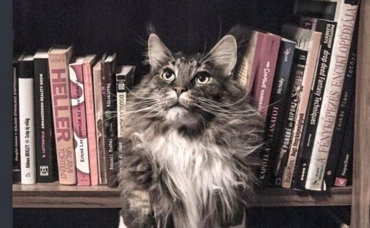 catsnbooks_640