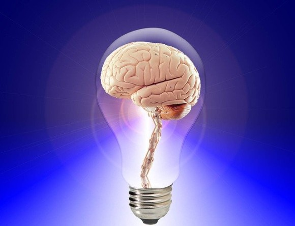 brain-20424_640_e