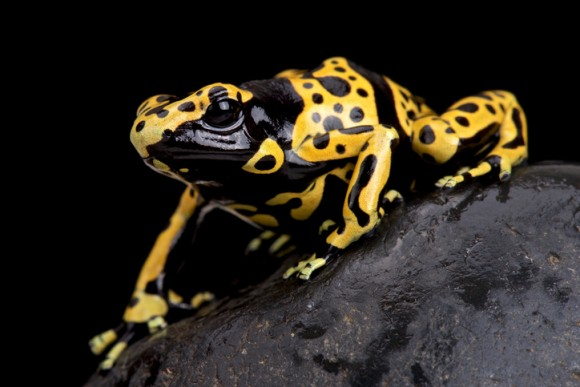 毒のクセは強いが、人類の治療にも役立ってしまうかもしれない10の生物(爬虫類・クモ出演中)