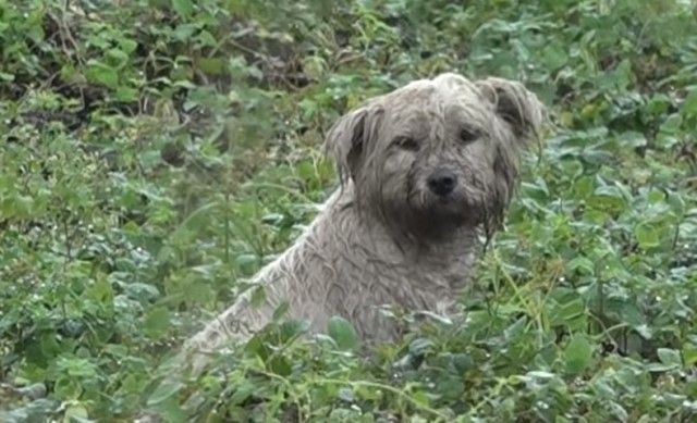 台風で子犬たちと離ればなれになってしまった犬を助けたい!地域住民が協力して母犬を保護