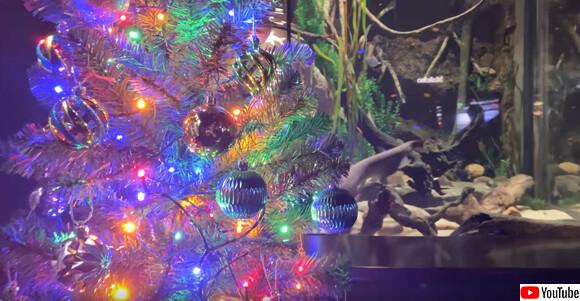 デンキウナギの放電でメリークリスマス!