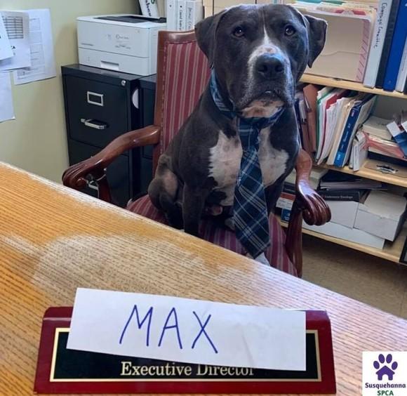 保護施設で1年半、ようやく家族に巡り合えた犬