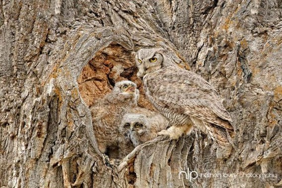 camouflaged_owls_18_e