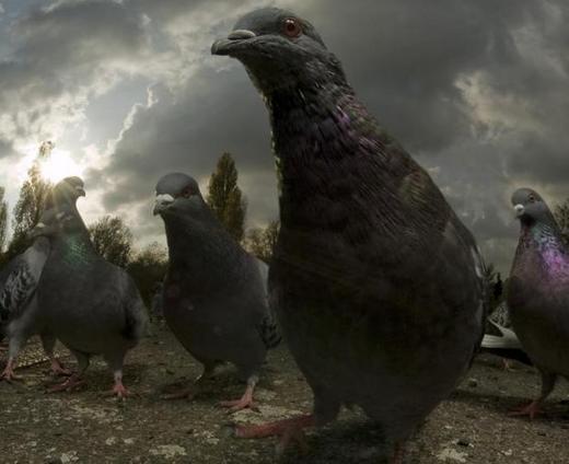 pigeons-in-peckham_2