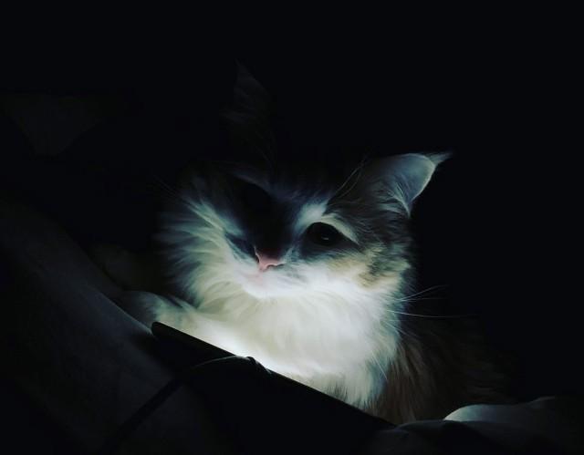 猫のデータベース攻撃