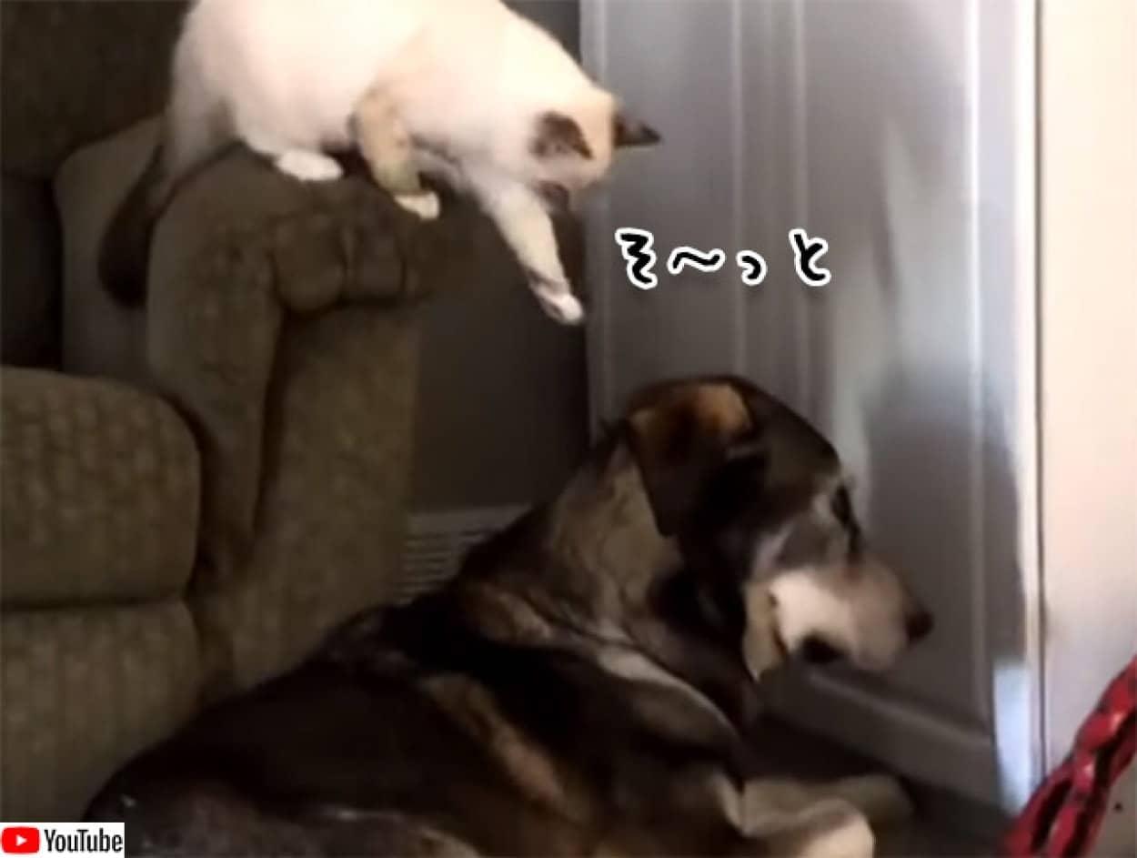 犬の頭を撫でたい猫のミッションコンプリート