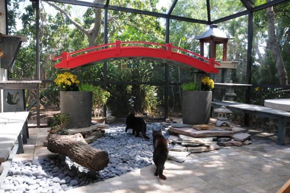 猫たちが敷地内でアウトドアを楽しめる、豪華で機能的な猫専用パティオを設計するアメリカの企業