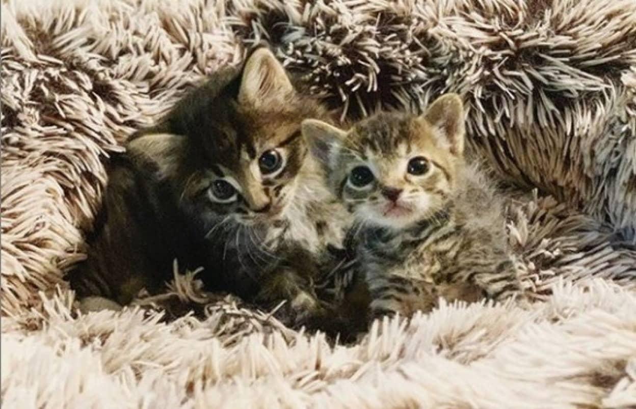 2匹の子猫の保護物語
