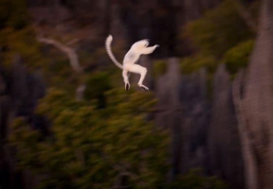 Madagascar_14