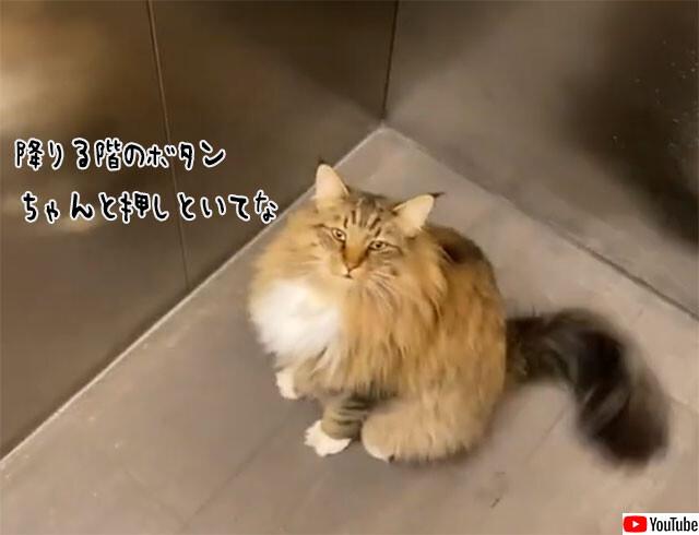 エレベーターを使いこなす猫。自分の部屋の階で必ず降りられる理由とは?
