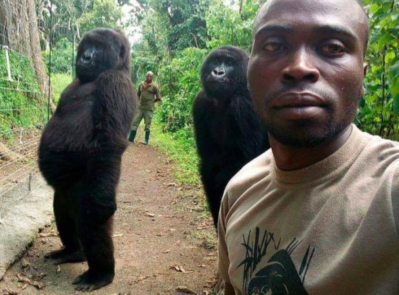 自撮りに偶然映り込んだゴリラギャルズたちのナイスポージング(コンゴ)