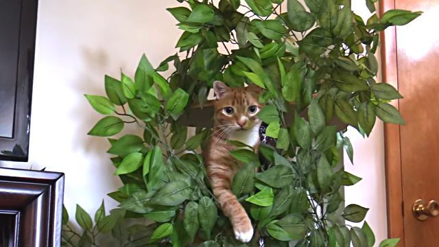 catsntrees0