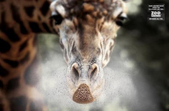 zoo_1700