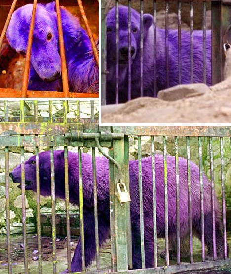 purple_animals_10