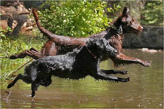 synchronized swimming animals 2