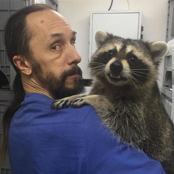raccoon-1 [www.imagesplitter.net]