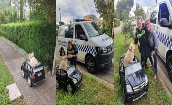 警察が不審車両発見、小さな車を運転していたのはなんと犬!それにはこんなやさしい事情があった(オーストラリア)