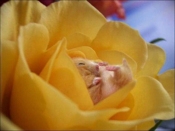 hamsters_03