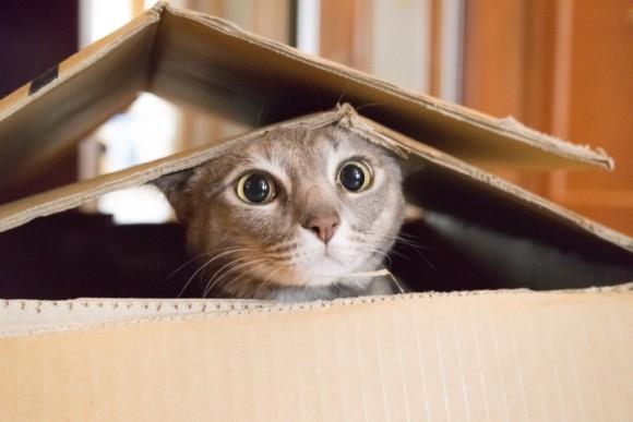 シュレーディンガーの猫ならぬシュレーディンガーの細菌が量子生物学の重要な一歩となるかもしれない(英研究)